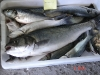 X Concurso de Pesca
