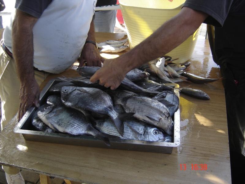 concurso-pesca-4